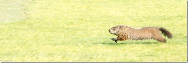 groundhog-3