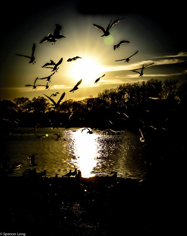 sunsetbirdsB