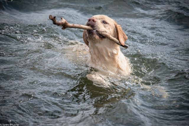 swimdogs-26
