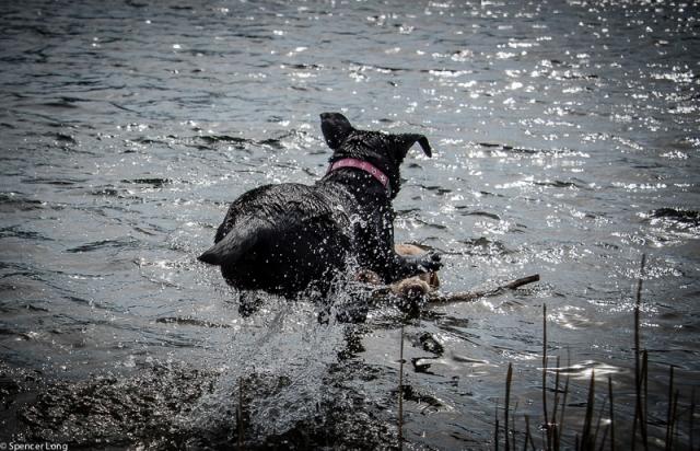 swimdogs-39