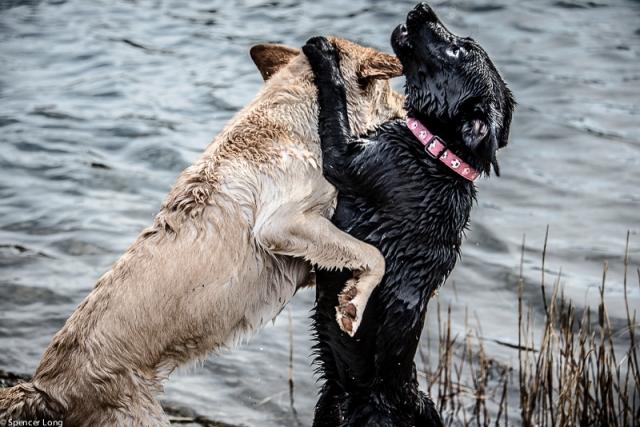 swimdogs-40