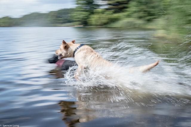 swim.dogs-5
