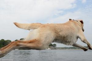 flyingdogs-3