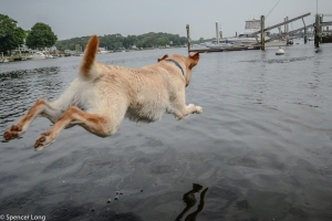 flyingdogs-8
