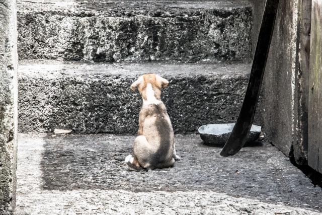 puppy.staring-1