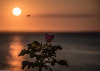 Bee.sunset
