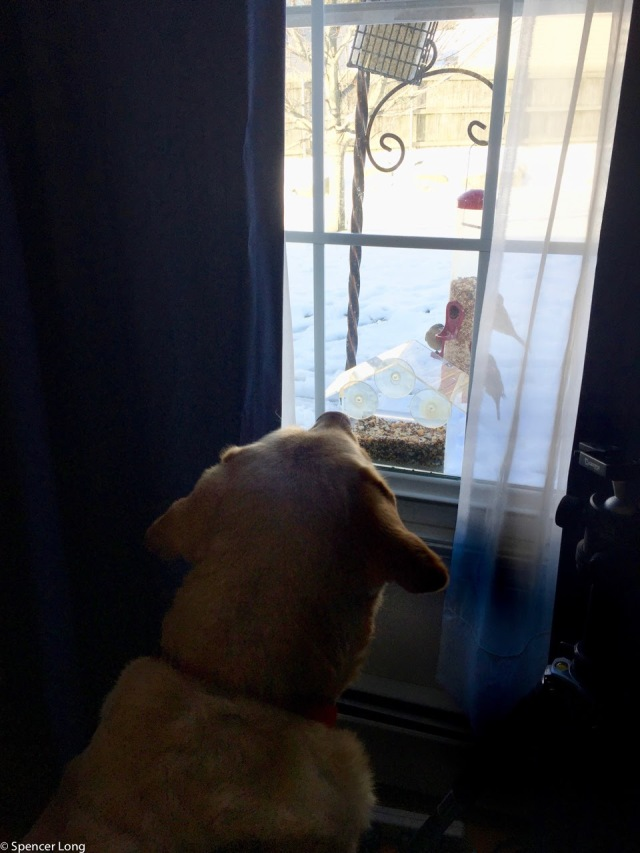 boomer.bird.watching