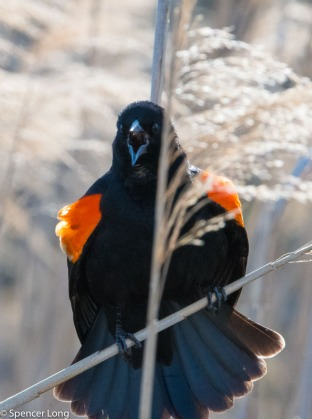 audubonwalk.birds-111