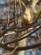 audubonwalk.birds-120
