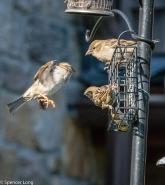 audubonwalk.birds-130
