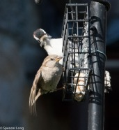 audubonwalk.birds-154