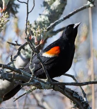 audubonwalk.birds-65