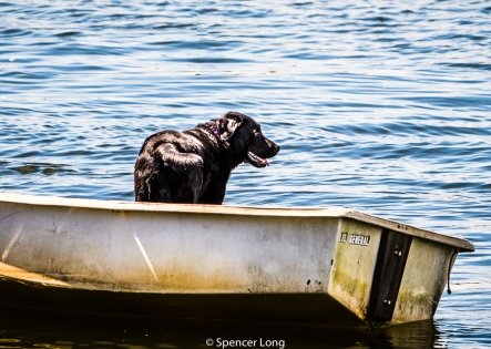 dogs.boats-4