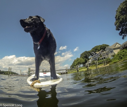 gopro.dog.swim-38