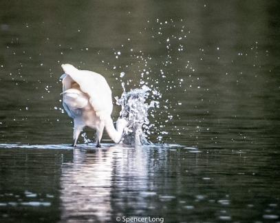 narrow.river.birds-101