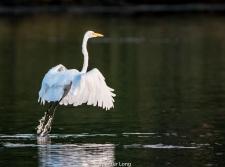 narrow.river.birds-104