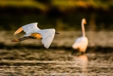 narrow.river.birds-120