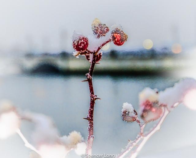 Berries.Barrington