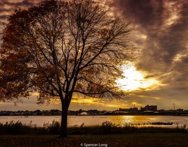 tree.sunset