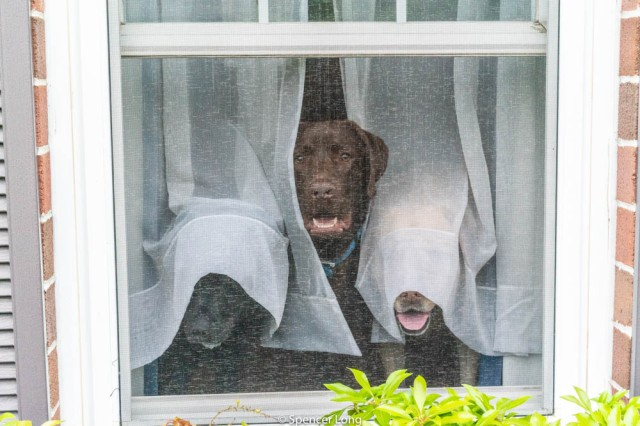 Screen.Dogs