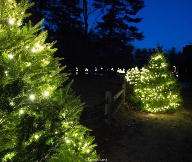 christmas.trees